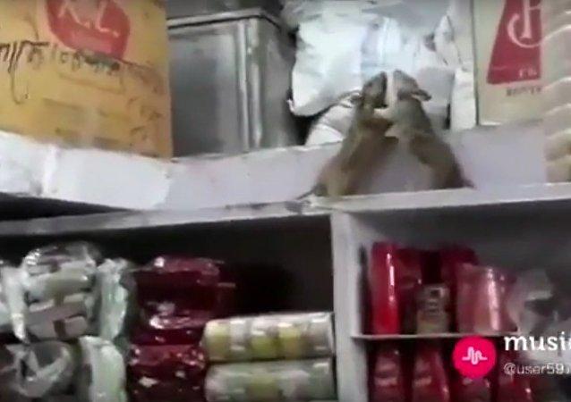 Dos ratas 'llegan a las manos' en un supermercado