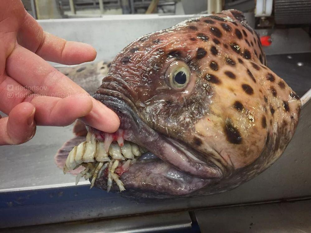 Las misteriosas criaturas que abundan en las profundidades marinas cerca de Rusia
