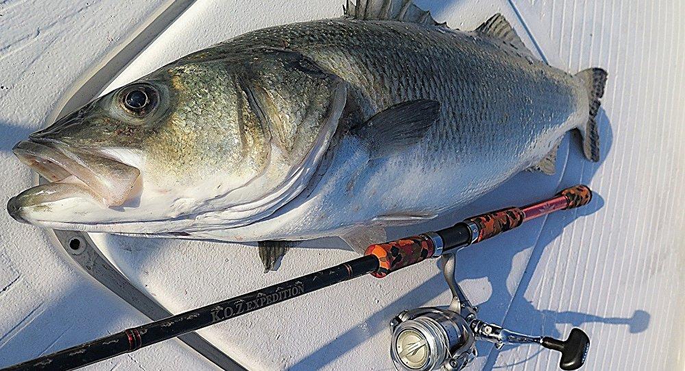 Pesca artesanal (imagen referencial)