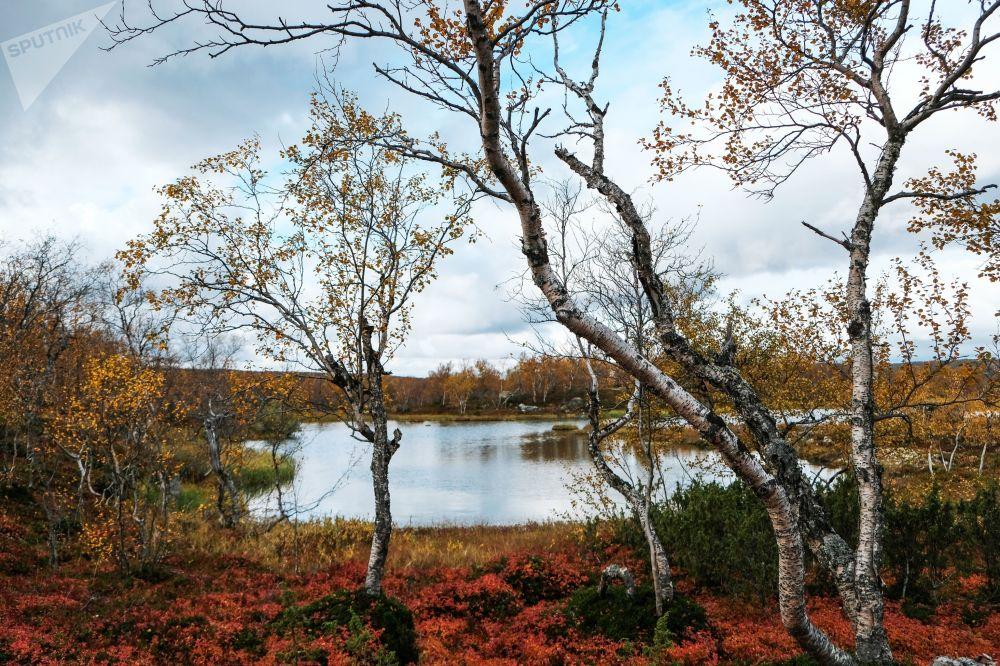 ¿Qué es el otoño boreal? Los mejores paisajes de Rusia, en imágenes