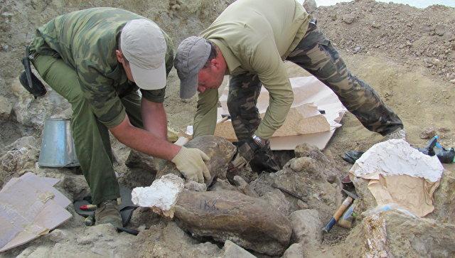 Excavaciones en la península de Taman (sur de Rusia)