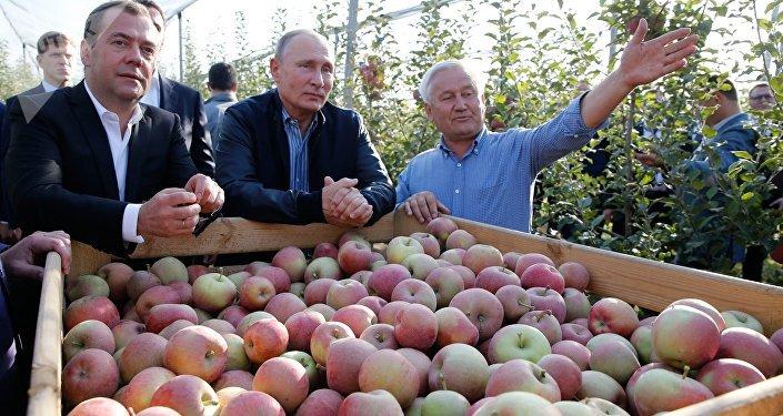 El presidente ruso, Vladímir Putin, y el primer ministro, Dmitri Medvédev, en una reunión con agricultores en la región de Stávropol