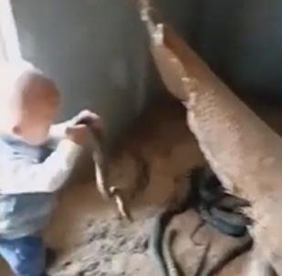 Un bebé chino revuelve con sus propias manos un nido de serpientes