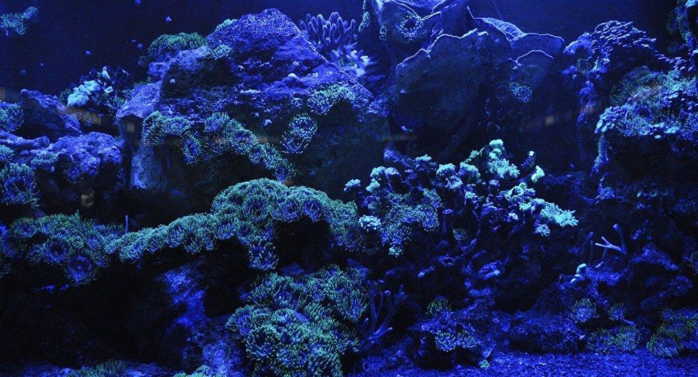 El mundo submarino