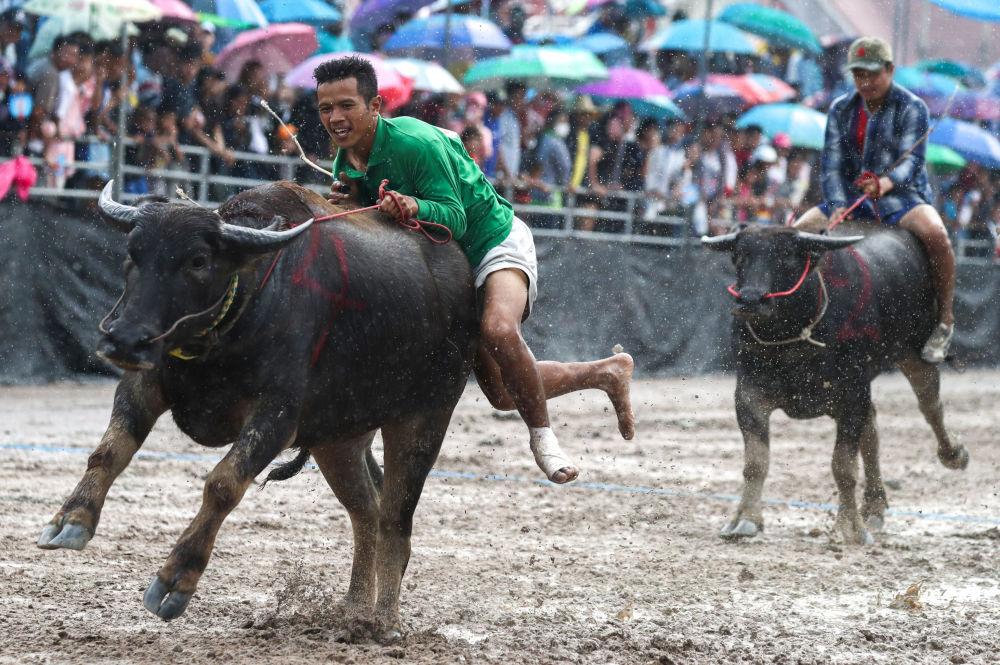 Participante del festival anual de búfalos en Chonburi, Tailandia.