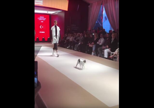 Un gatito conquista una pasarela de moda en Estambul