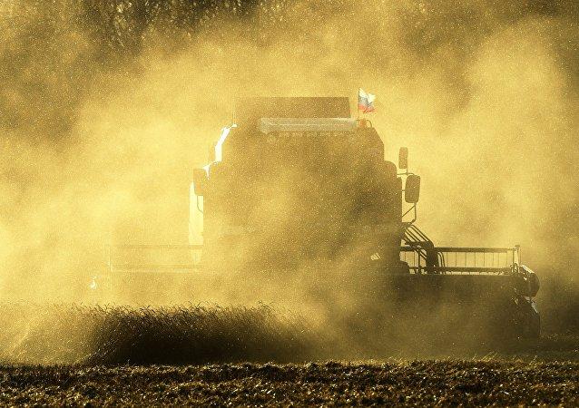 Recolección de la cosecha en Rusia