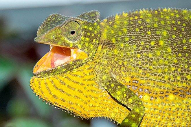 Un reptiliano sorprendido porque la ciencia descarta su existencia