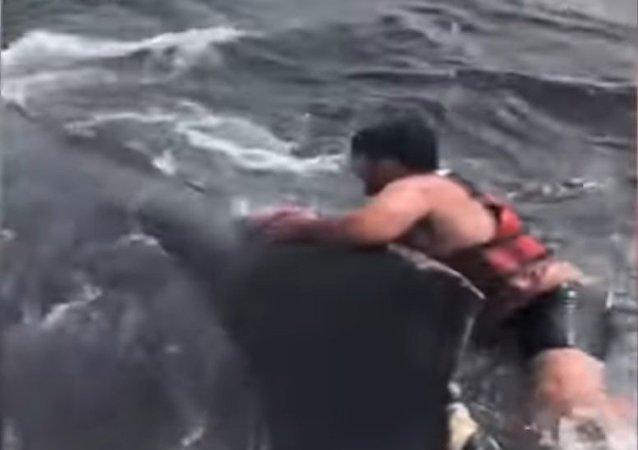 ¿Montar una ballena? ¡Fácil!