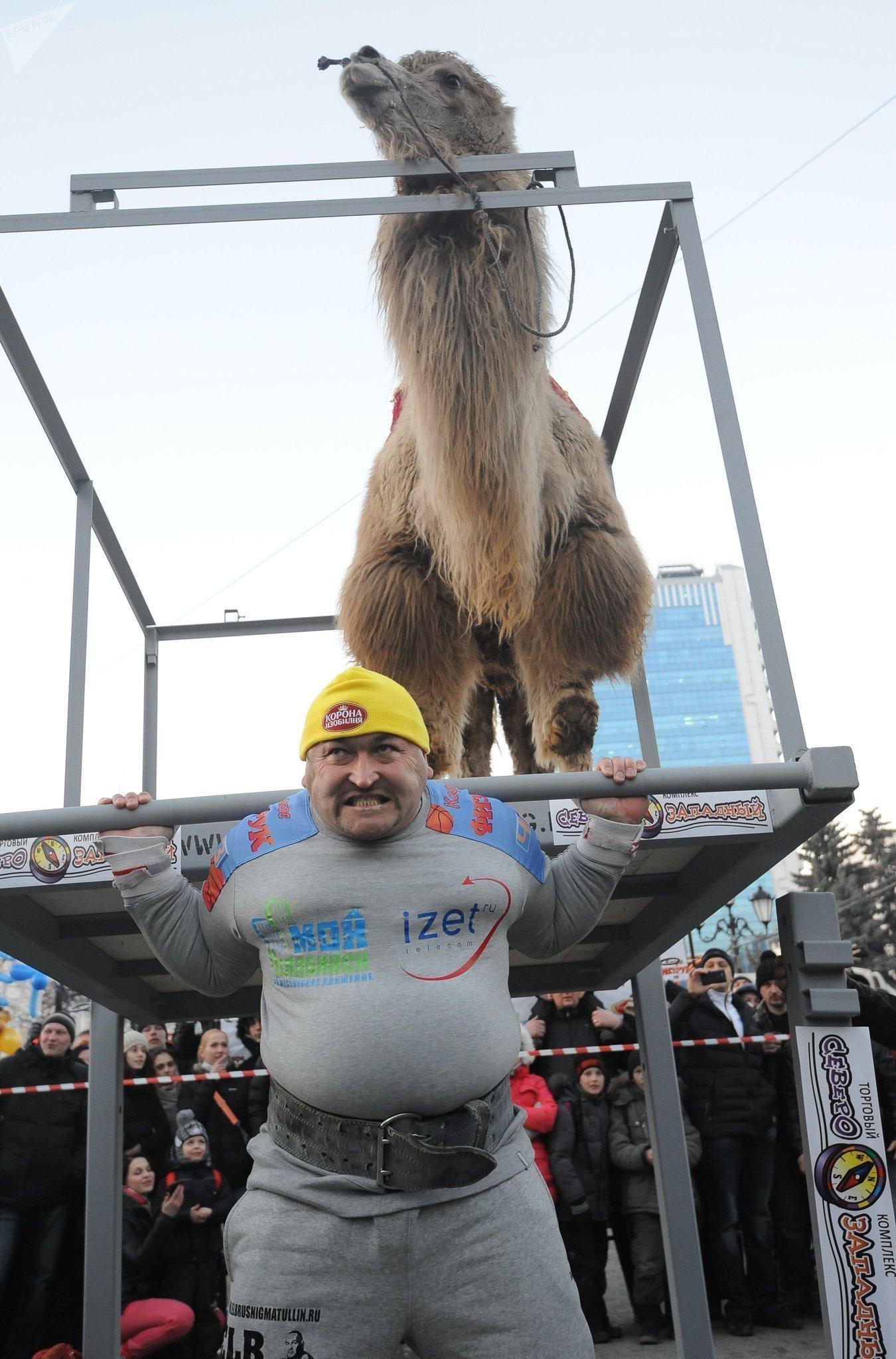 Elbrus Nigmatullin levantando un camello