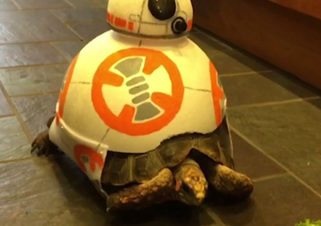 Esta tortuga se une a 'la guerra de las galaxias'