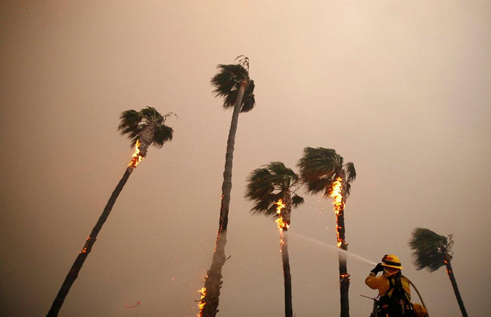 Un bombero lanza agua a presión contra una palmera en Woolsey (Malibú)