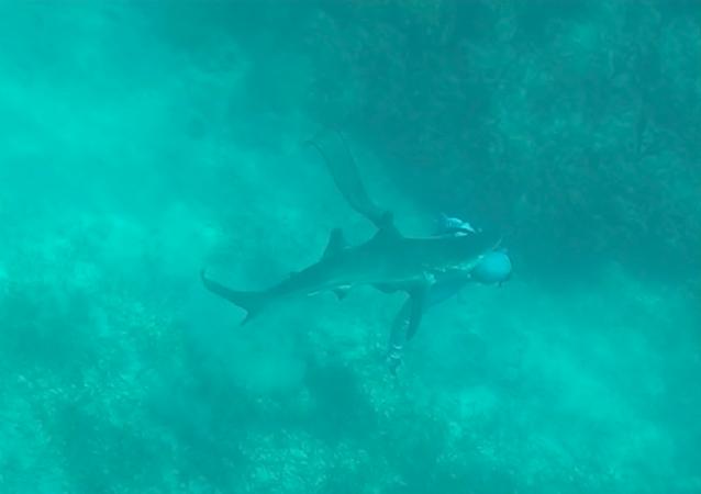 El espeluznante momento en el que un tiburón ataca a un pescador