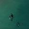 Una mujer sin miedo nada junto a un grupo de orcas