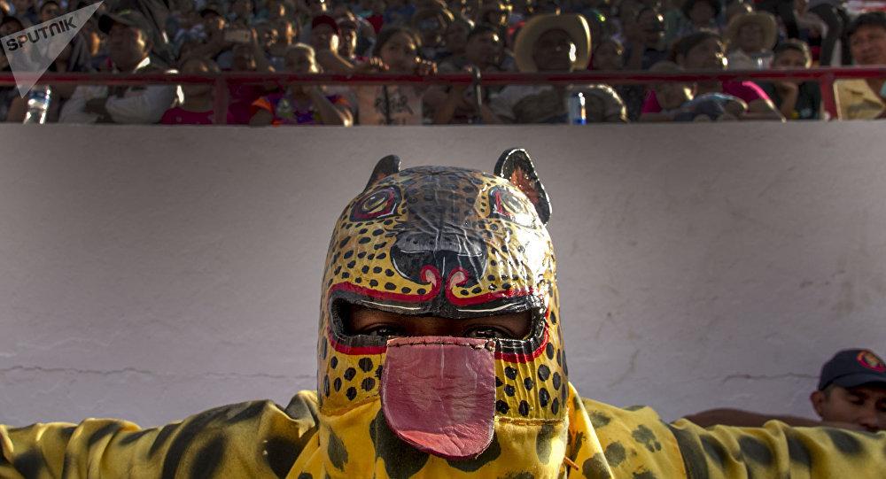 Tigre de San Antonio se prepara para luchar en el porrazo