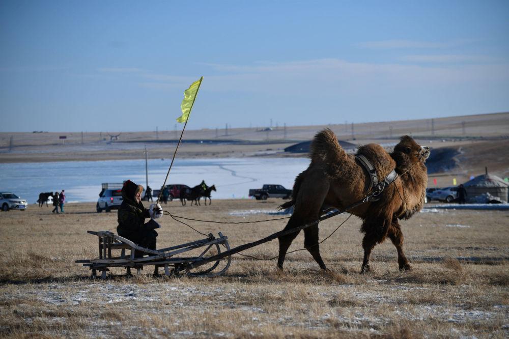 Linces, trineos de camellos y mucha belleza: las mejores imágenes de la semana