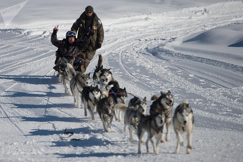 Un turista montando en trineo tirado por unos perros husky