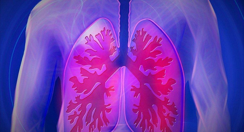 Los pulmones de una persona