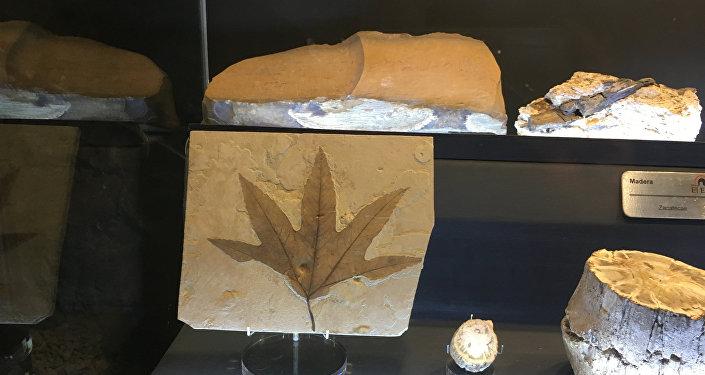 Muestras expuestas en el museo de Las Rocas y Fósiles en Zacatecas, México