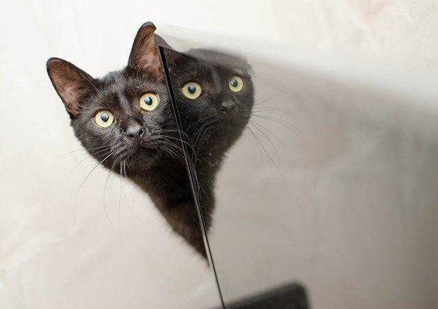 Un gato y un espejo