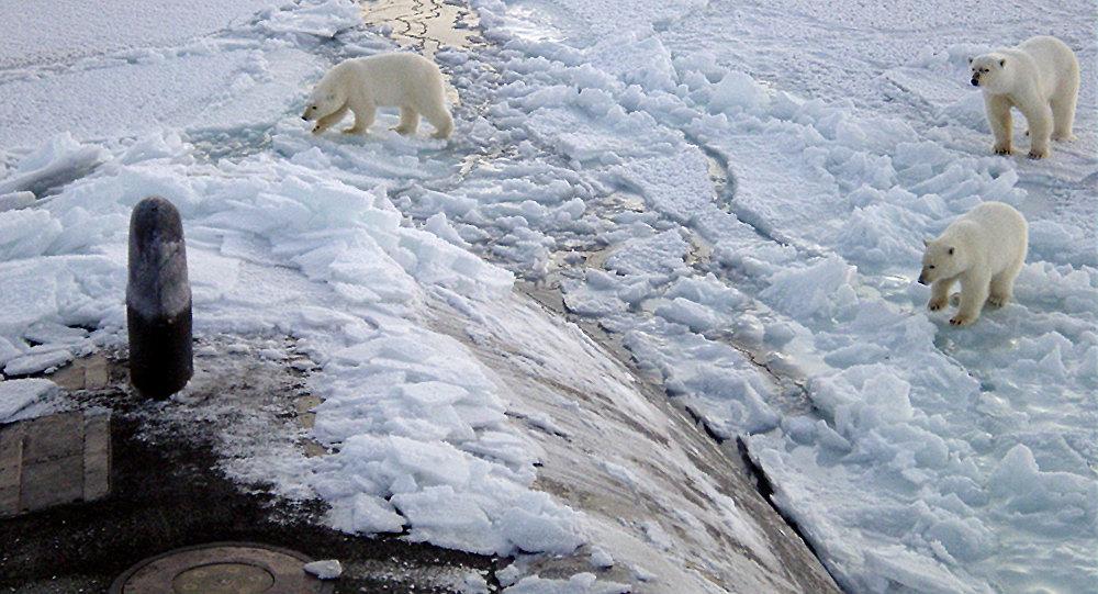 Osos polares acercándose al submarino nuclear USS Honolulu (2003)