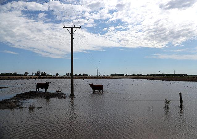 Un campo inundado en la provincia de Buenos Aires