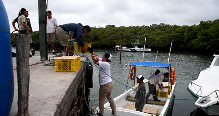 Embarque de las Iguanas Conolophus subcristatus en Seymour Norte, con destino a Isla Santiago, en Islas Galápagos