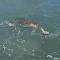Un cocodrilo da una lección a dos pescadores que no olvidarán
