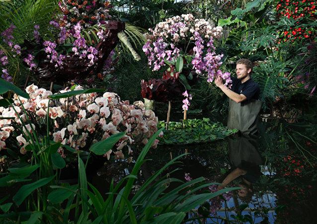 Festival de la Orquídea Kew Gardens en el Reino Unido