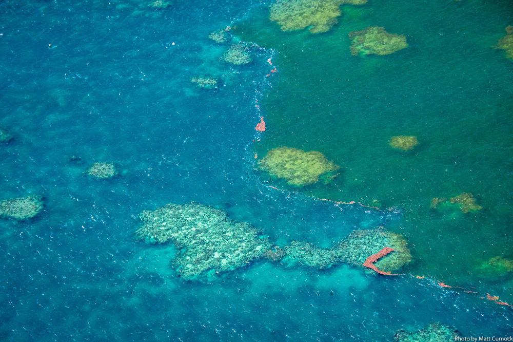 La Gran Barrera de Coral, en peligro mortal