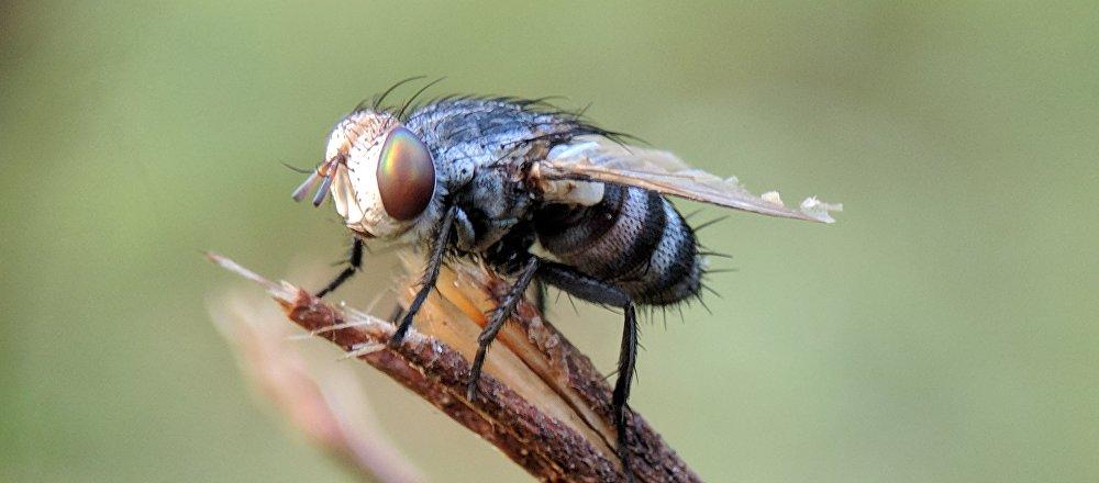 Una mosca (imagen referencial)