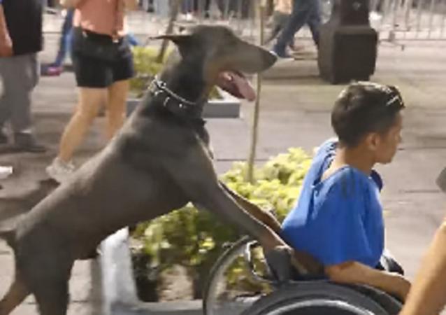 Este perro que empuja la silla de ruedas de su dueño te robará el corazón