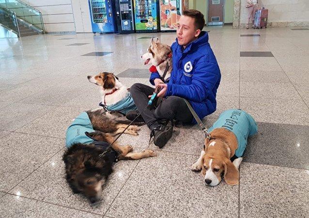 Los perros que trabajan en el aeropuerto de Domodédovo