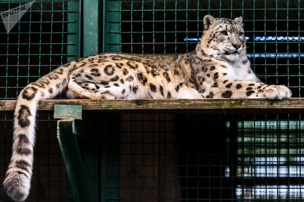 Belleza felina: estos son los gatitos con los que puedes encontrarte en Rusia