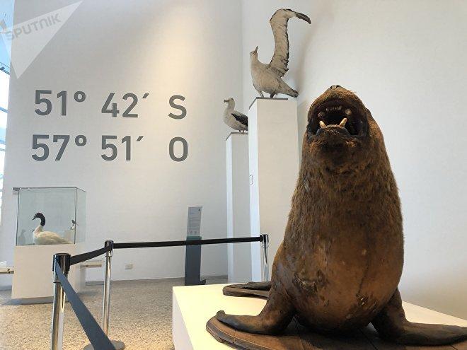 La fauna del sur del mundo tiene su lugar en el museo de Malvinas. Las especies presentes en el archipiélago están exhibidas, como se puede ver aquí.
