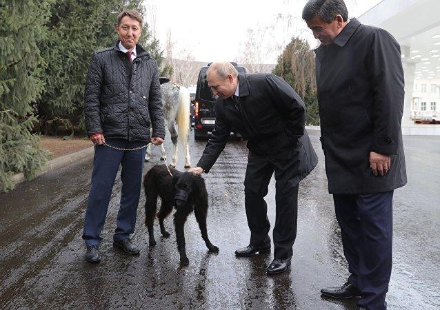 El presidente kirguís, Sooronbay Jeenbekov, le regala al presidente ruso, Vladímir Putin, un cachorro