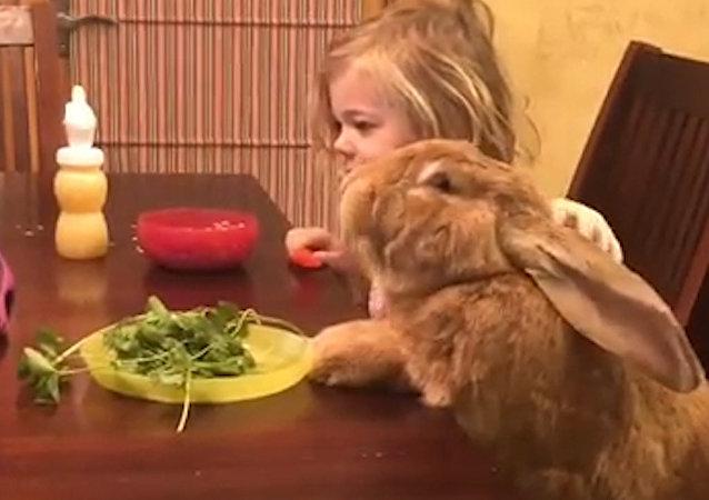 El amor de una niña y un conejo gigante