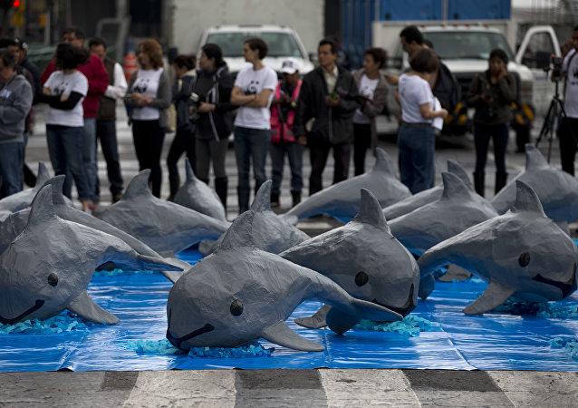 Una intervención de WWF por la vaquita marina