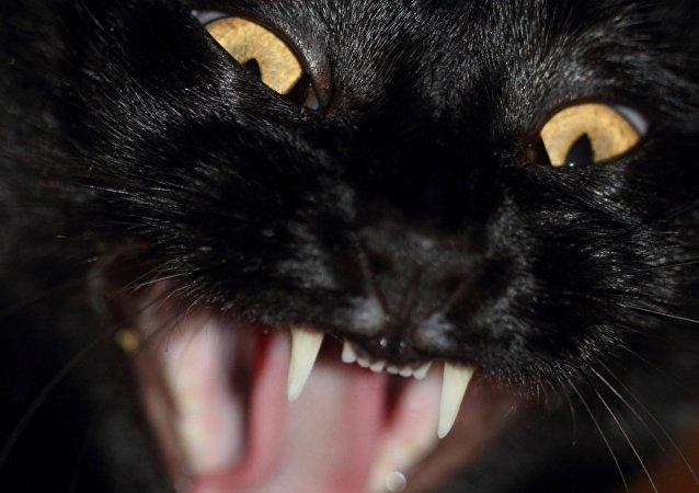 Un gato furioso