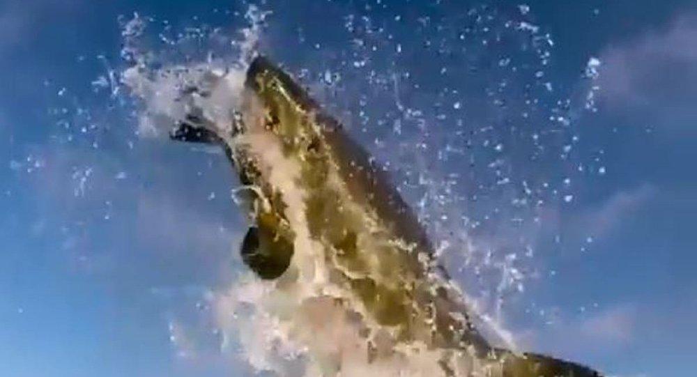 Un ataque de tiburón