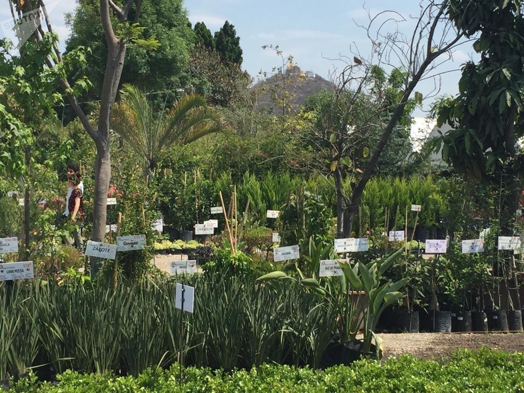 Actividad normal en el Megaviveros, el más grande de Atlixco, que provee flores y plantas ornamentales a la región del altiplano central que barca la Ciudad de México
