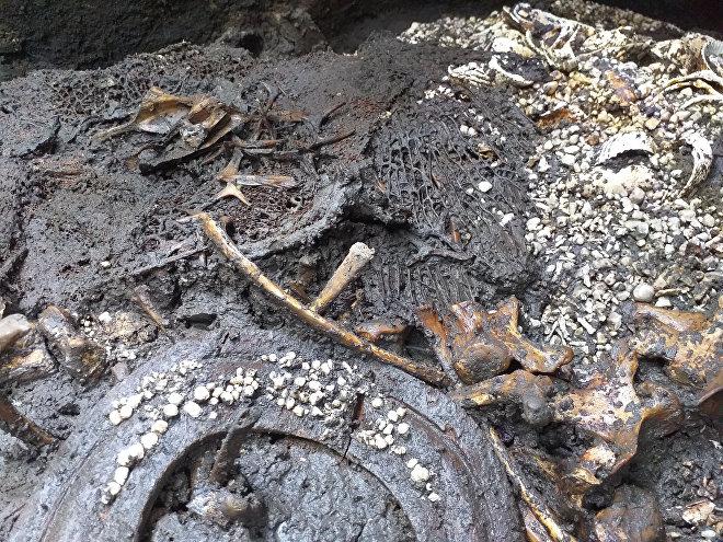 Vista general del hallazgo de la ofrenda 178, donde se observa un disco de madera, conchas, restos diminutos de estrellas de mar y la columna vertebral del jaguar