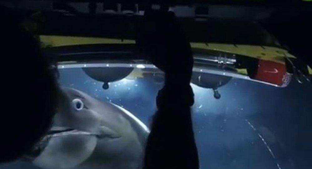 Un tiburón ataca a un submarino