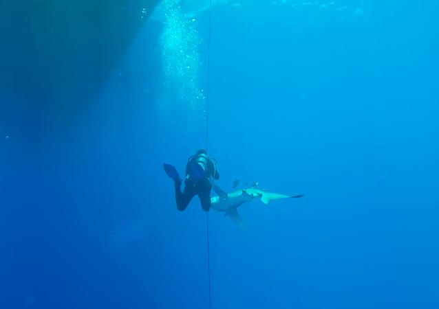 Un submarinista no logra escapar de un tiburón que lo ataca