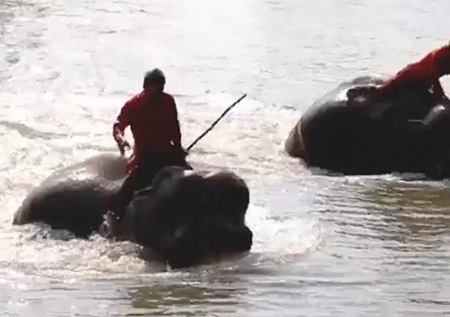 Una carrera acuática de elefantes se celebra en Tailandia