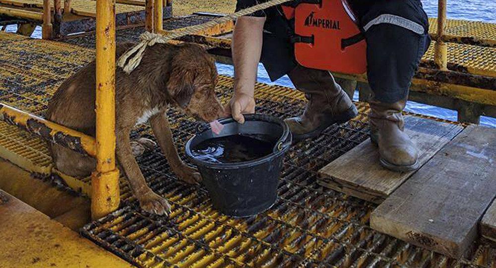 Perro rescatado en alta mar en Tailandia