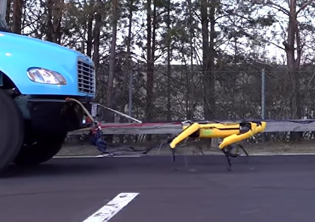 Los perros robot de Boston Dynamics ya saben remolcar un camión