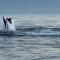 Unos lobos marinos se enfrentan a un tiburón blanco