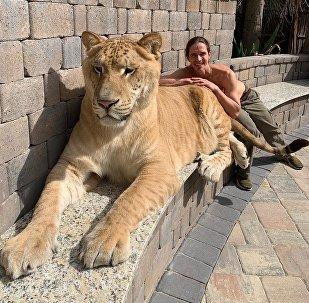 Kody Antle, conocido domador de grandes felinos, y su ligre Hércules