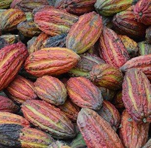 Granos de cacao, referencial
